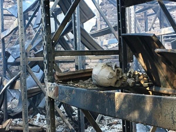 Prédio do Museu de História Natural da UFMG pega fogo em BH